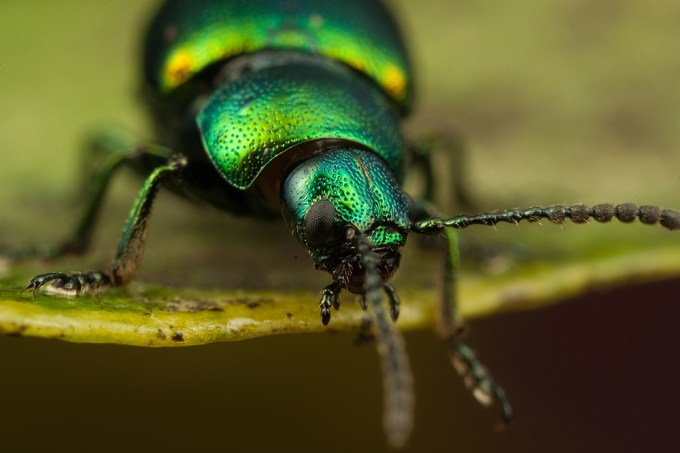 Macro Photography by Alistair Campbell-18