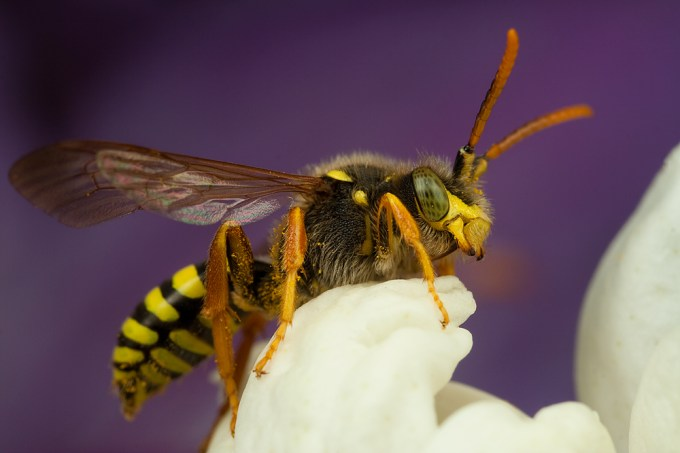 Macro Photography by Alistair Campbell-2
