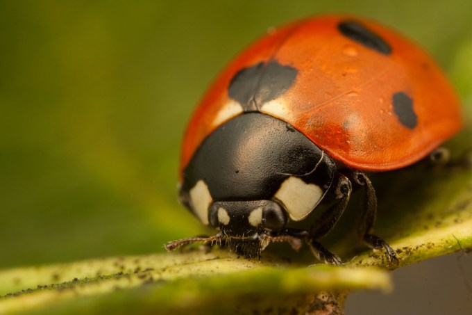 Macro Photography by Alistair Campbell-20