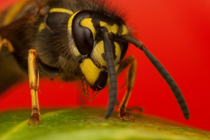 Macro Photography by Alistair Campbell-21