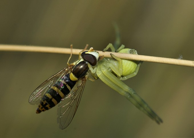Macro Photography by Alistair Campbell-25
