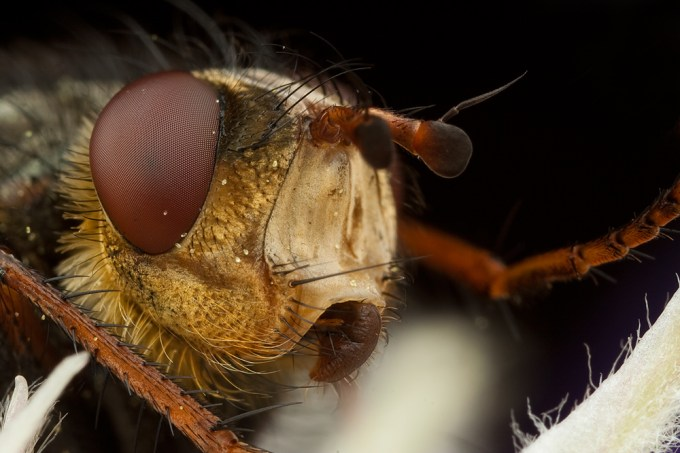 Macro Photography by Alistair Campbell-9