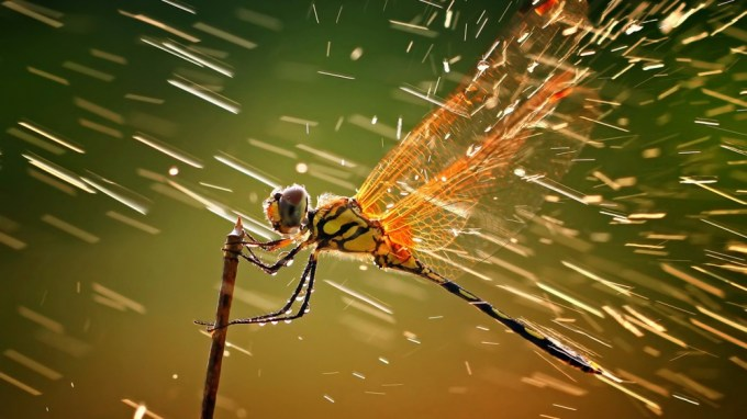 11529510-R3L8T8D-1000-macro-ventube-com-dragonfly-and-water-