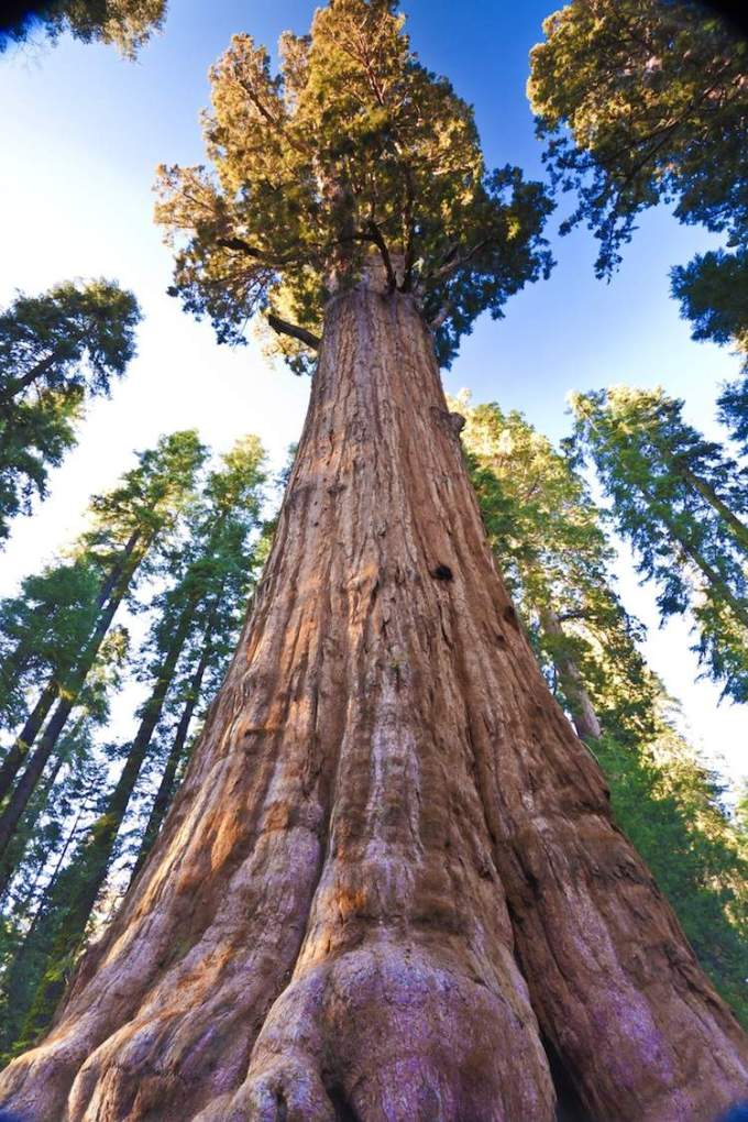 General-Sherman-Tree-Sequoia-National-Park-1