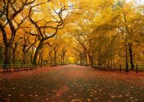 13 Most Beautiful and Popular Trees Around The World 12