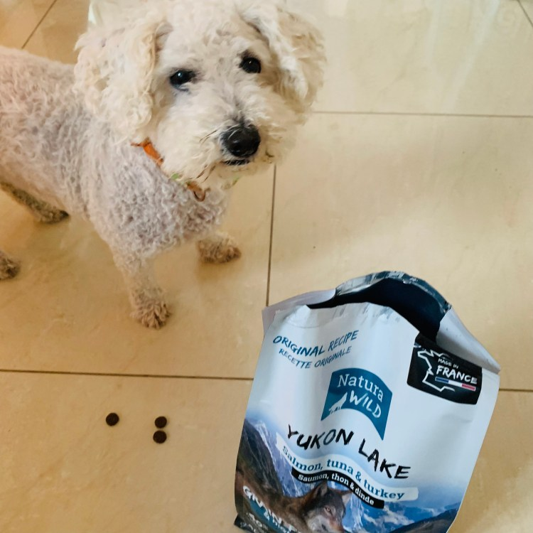 Zoodirect croquettes chien riche en protéines