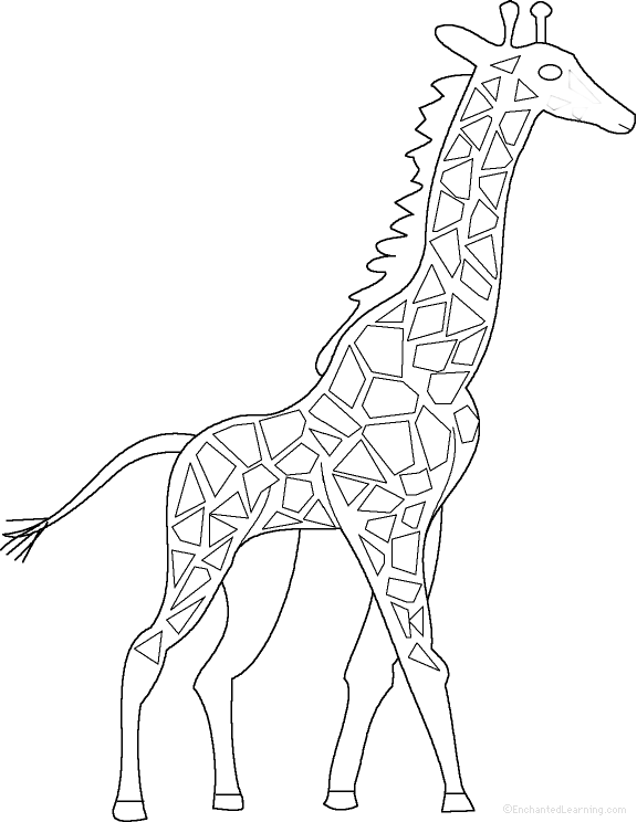 Giraffes at EnchantedLearning.com