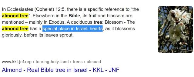 Almond tree in the Bible. Pablo Hasel decoded by Enchanted LifePath