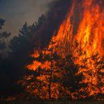 burning pine forest - Norma Kamali Incense - Enchanté Fragrance