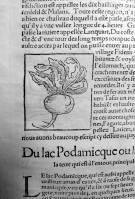 145. MÜNSTER. La cosmographie universelle. [Bâle, Henry Pierre, 1556]. Navet