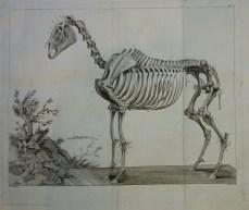 202. LAFOSSE. Cours d'hippiatrique, 1772