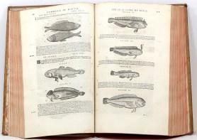 418. MATTHIOLI. Commentaires sur les six livres de Dioscoride. 1572.