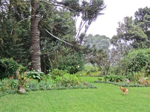 The side lawn and the Foundation's puppy. For decades, Roz loved having Intore dancers here on Sundays.