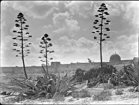 Golden Gate and east wall seen through group of century plants [agave], c. 1900-1920.