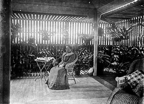 Fernery in the Clayfield residence, Elderslie, in the Brisbane suburb of Clayfield, ca. 1900.