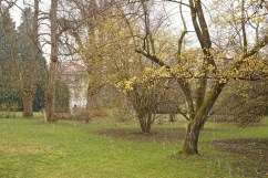 First seeing the Spielhaus through Japanese cornelian cherry trees in bloom.