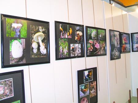 Exposición fotográfica que amosa na Casa da Xuventude de Chantada diversos exemplares micolóxicos recollidos na zona. (Foto cedida).