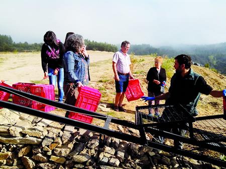 Imaxe de arquivo dunha edición anterior do Viñobús, cun grupo de visitantes a punto de participar na fase de vendima do programa. Arquivo EC