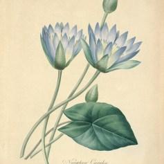 Blue_Lotus_Plate_73_htsj5c__44898.1486485649