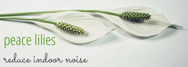Peace lilies reduce indoor noise