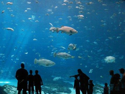 Georgia_Aquarium_9_by_Dracoart_Stock (1)