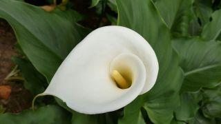 膣の中に導くように咲く花びらは性器みたい! ~エッチな花~
