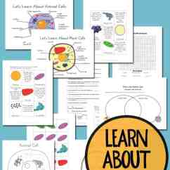 3d Animal Cell Coloring Diagram Amp Wiring Plant And Printables Grades 4 6 Recognizing Remembering The Functions Of Organelles In Cells Can Be A Challenge
