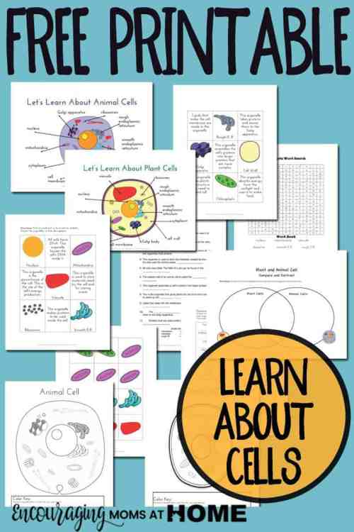 small resolution of Plant and Animal Cell Printables Grades 4-6