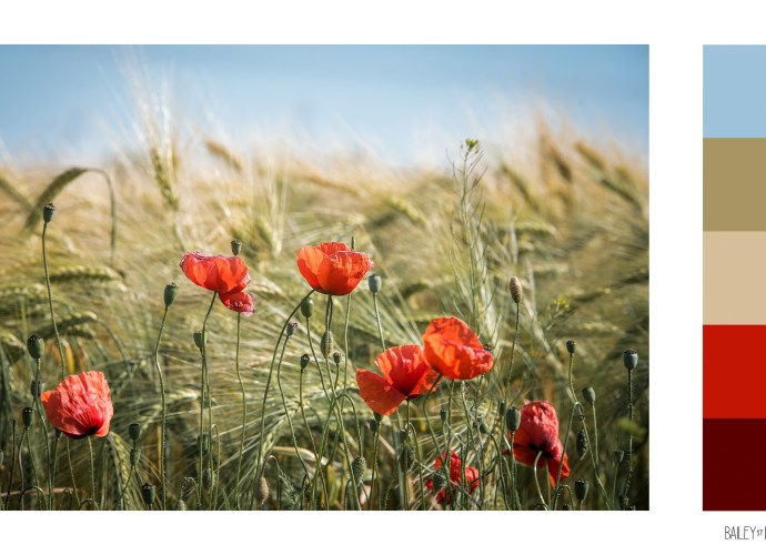 poppies colour swatch