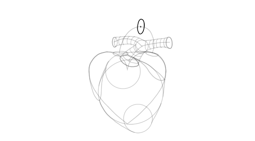 sketch thickness of aorta