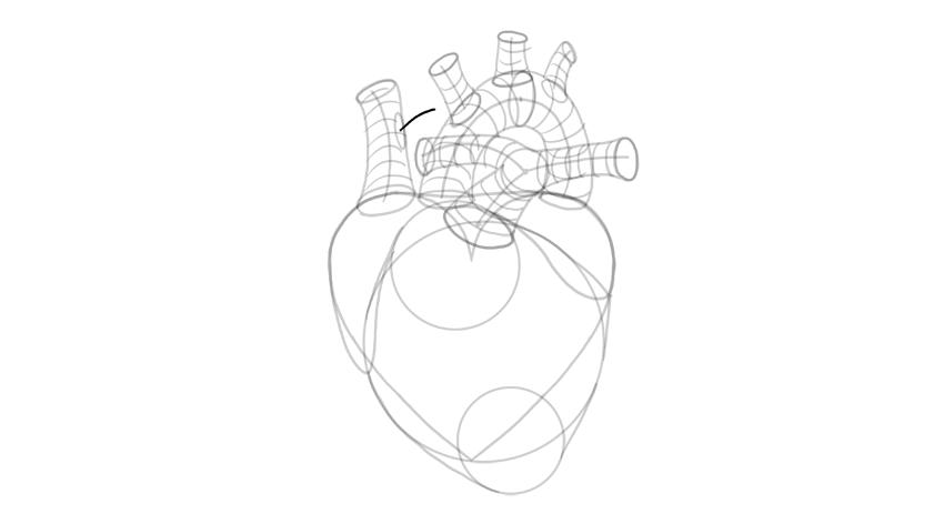 draw branching of vena cava