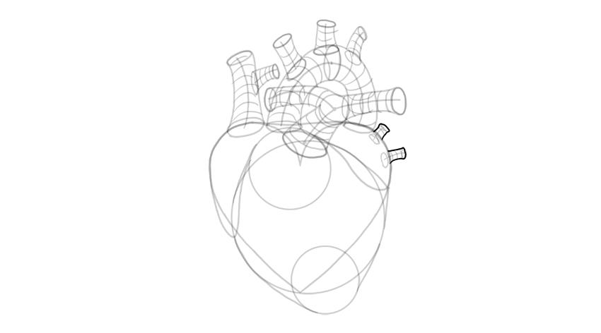 outline pulmonary veins