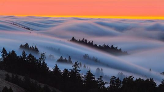 5-fog-nature-photography-by-ben-stein