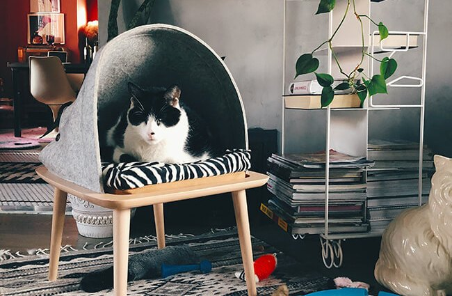 Cat on covered chair