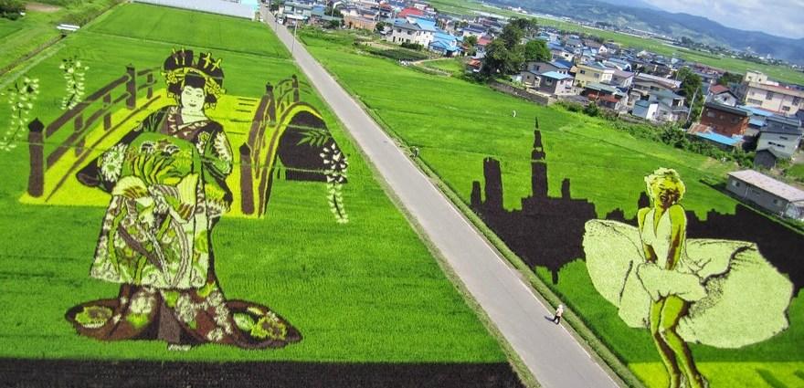 Rice paddy art canvas, Honshu