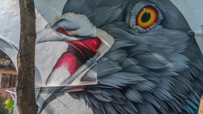 Street Art of a large pigeon head