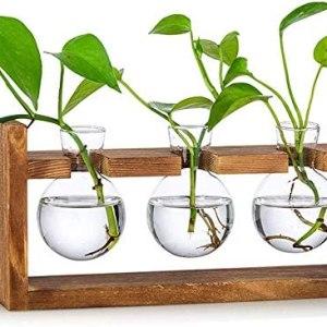 Propagation Station 3 Pcs Bulb Avocado Vase Glass Acorn