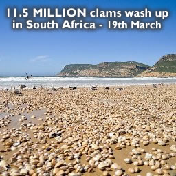 Clams South Africa