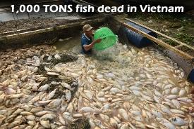 1,000 Tons fish dead vietnam