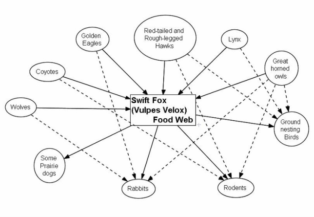 Red Fox Food Chain Diagram : 26 Wiring Diagram Images