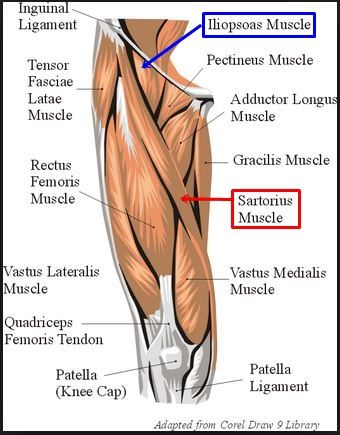 Inner thigh muscle pain