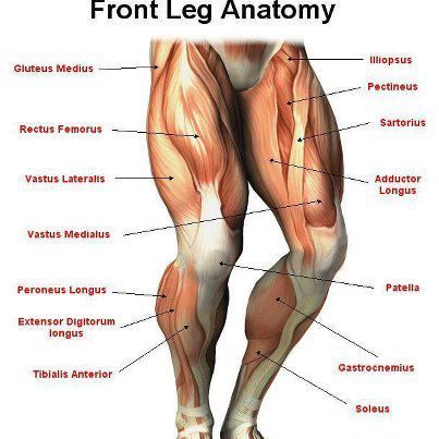 Thigh Front Side and Back Side Pain
