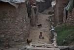 afghan refugees (4)