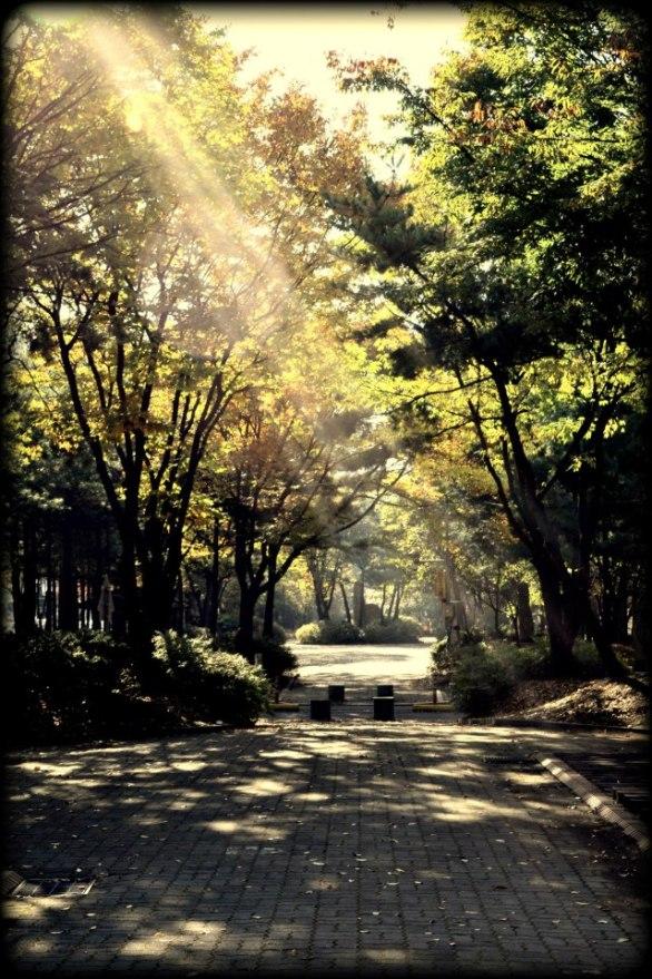 September Sunbeam