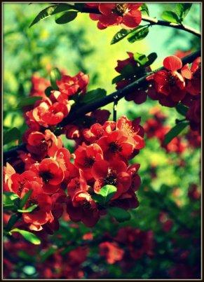 Sunshone Reds