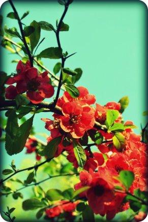 Sunshone Reds(a)