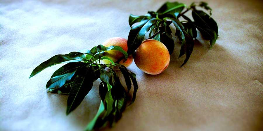 Pfirsiche für den Rumtopf