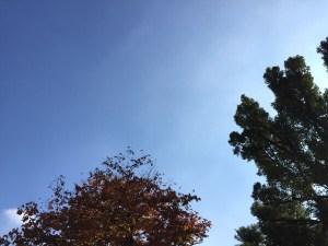 3色が決めて!冬の空をイメージしてのこだわりカラー☆