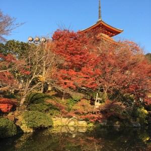 京都の清水寺へ紅葉狩り&おすすめグルメ
