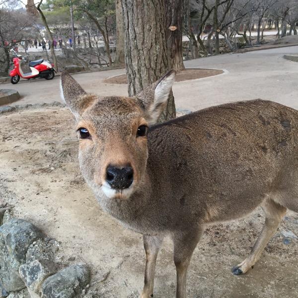 奈良県のインスタ映えスポット巡り(グルメ旅)